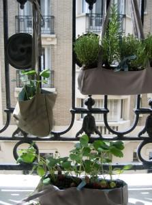 Un giardino in borsa vivaio cipolloni for Vasi da ringhiera